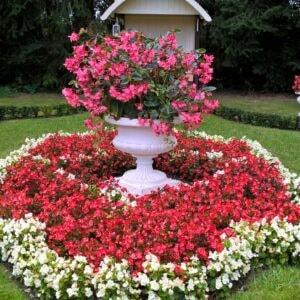 Vase Salutis Art 192
